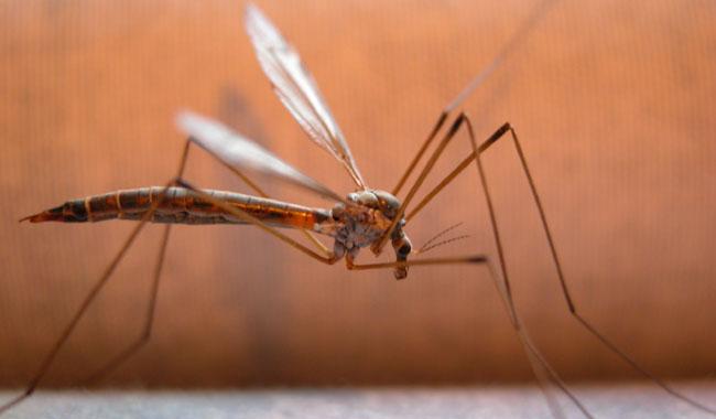 Προστασία από τα κουνούπια με φυσικό τρόπο